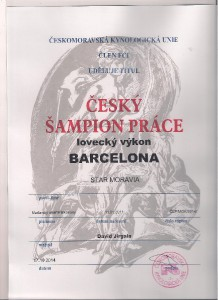 barcelona-sampion-prace-001.jpg